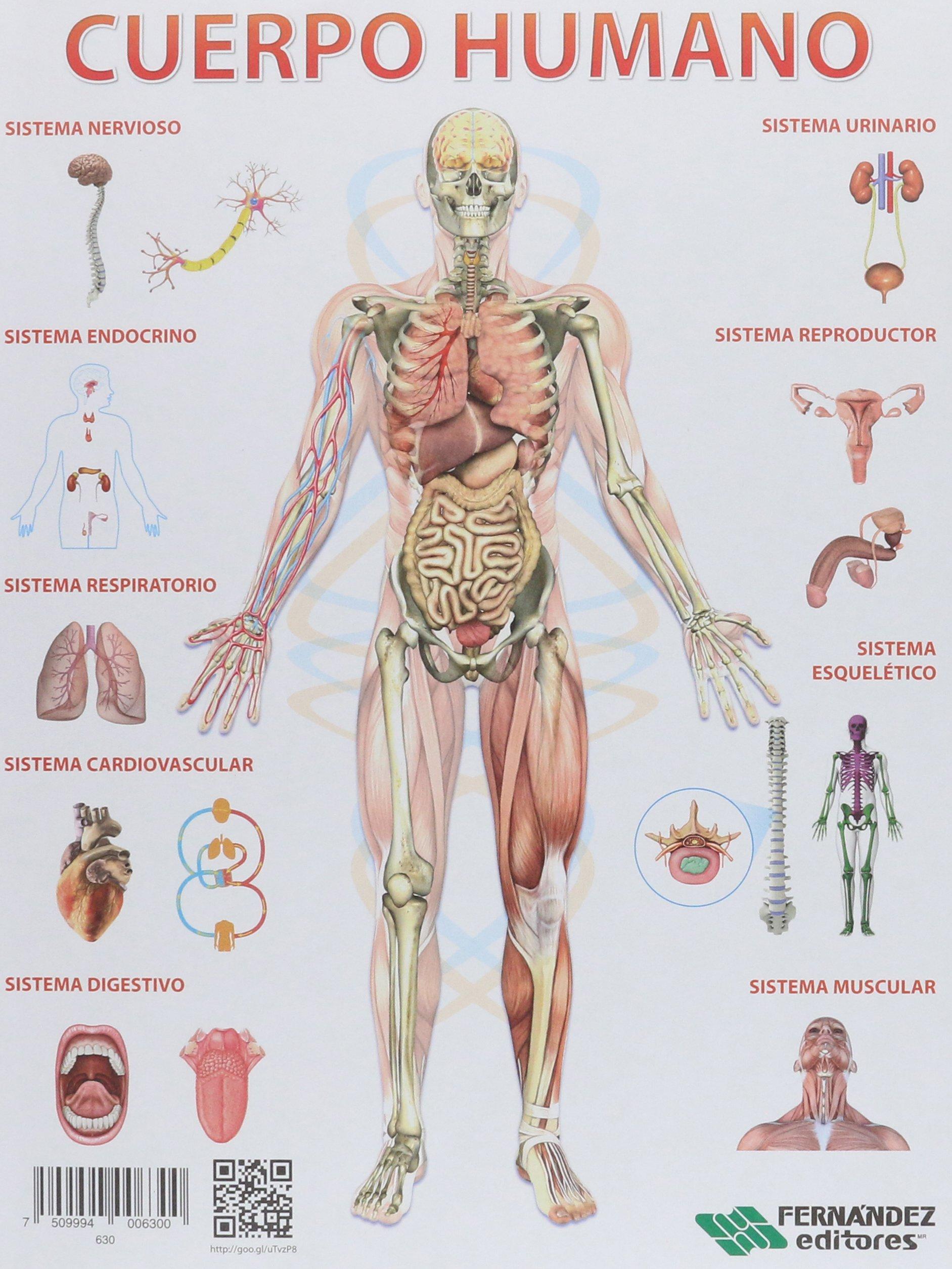 anatomia cromodinamica atlas para colorear pdf