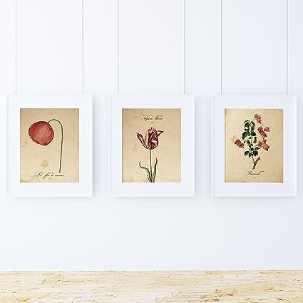 Pack de láminas Red One. Tres láminas tamaño A4. Posters con imágenes de botánica