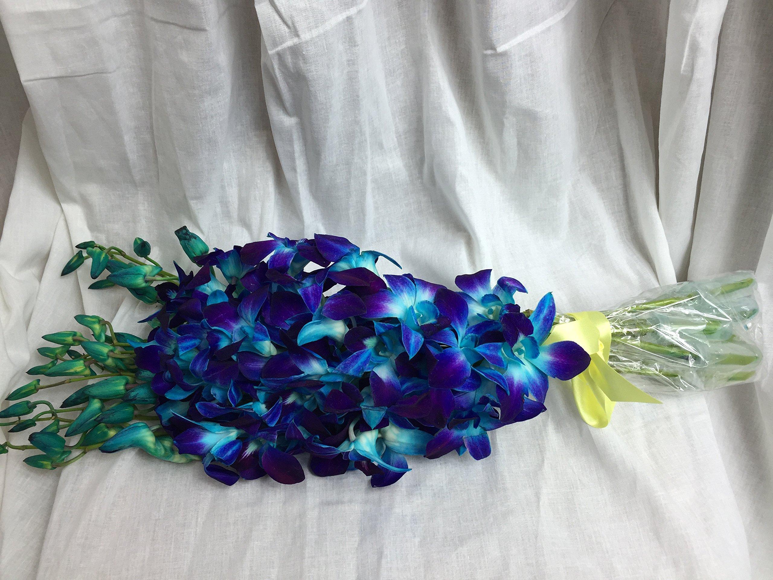 Premium Cut Blue Orchids (10 Stems Orchid) by eflowerwholesale (Image #3)
