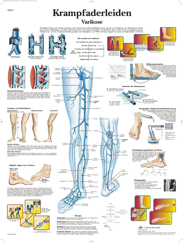 Ausgezeichnet Venensystem Anatomie Fotos - Menschliche Anatomie ...