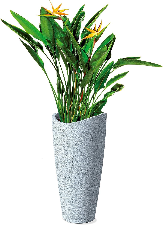 Scheurich 55374 254//80 Saluto Globe Slim plastica Pot Granito Fiori Bianchi 40 x 40 x 80 cm