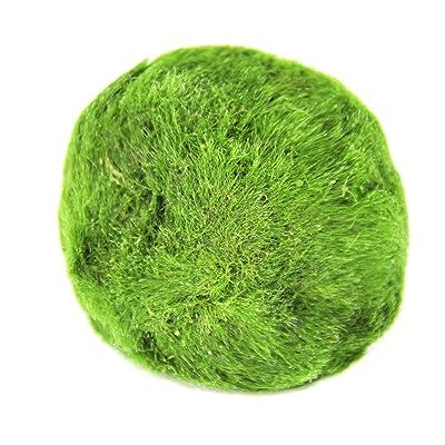 Joyfay Marimo Moss Ball