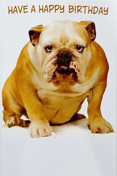 Happy Birthday Greeting Card W Bulldog Dog