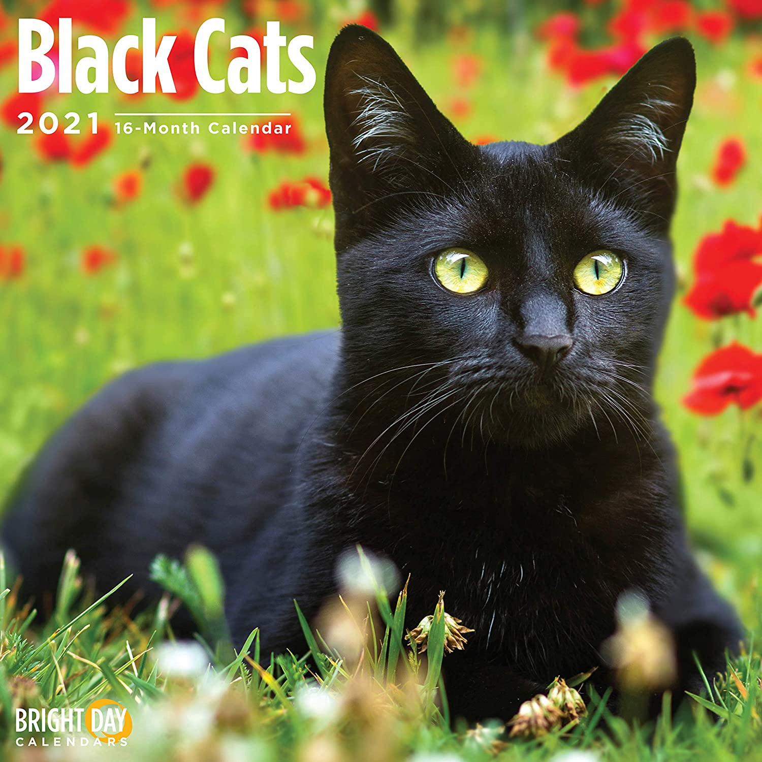 2021 Black Cats Wall Calendar by Bright Day, 12 x 12 Inch, Kitten Kitty
