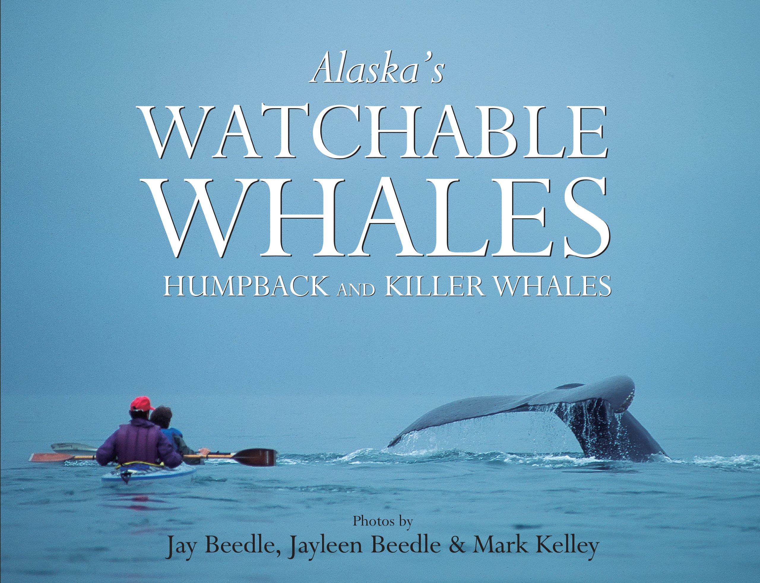 alaska u0027s watchable whales humpback u0026 killer whales mark kelley