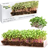 Window Garden Grow n Serve Microgreens Kit - Easy Planting and Growing, Indoor Superfood Seed Gardening, Complete with Acryli