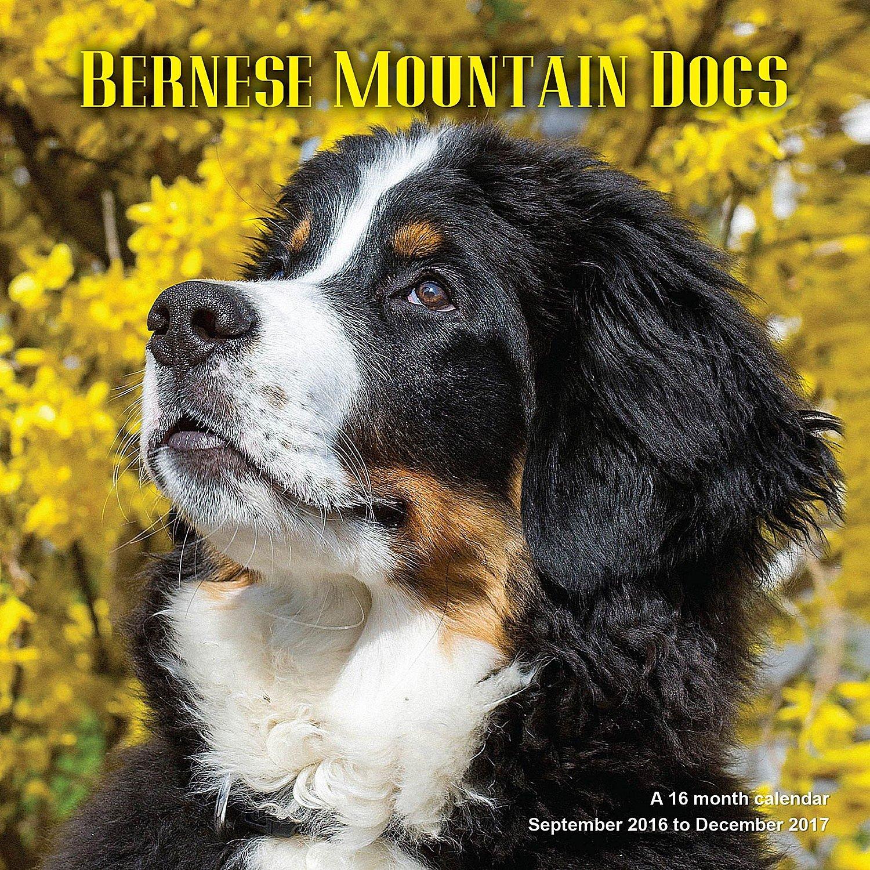 Bernese Mountain Dog Calendar Calendars product image