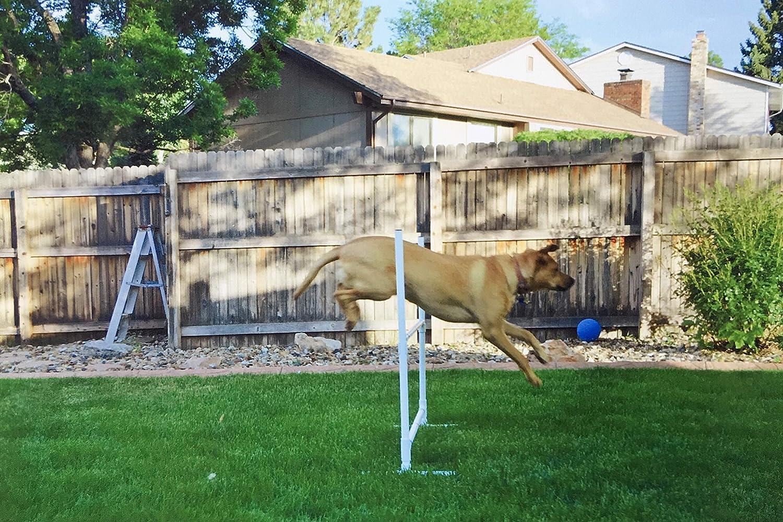 Dog Backyard Obstacle Course - House Backyards