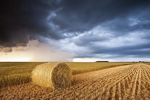 Amazon.com: Hay Bale in Golden Wheat Field Under Dark Clouds in Pratt, KS  print picture photo photograph fine art: Handmade