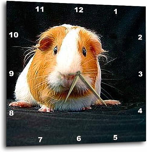 3dRose DPP_1062_2 Guinea Pig Wall Clock, 13 by 13-Inch