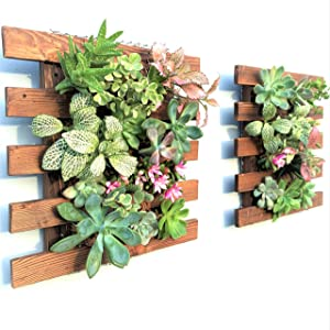 Wall Planter - 2 Pack Wooden Hanging Planter for Indoor Plants, Air Plant Succulent Holder, Vertical Garden. Plant Wall Decorations for Balcony, Wall Decor for Living Room, Room Decor for Teens