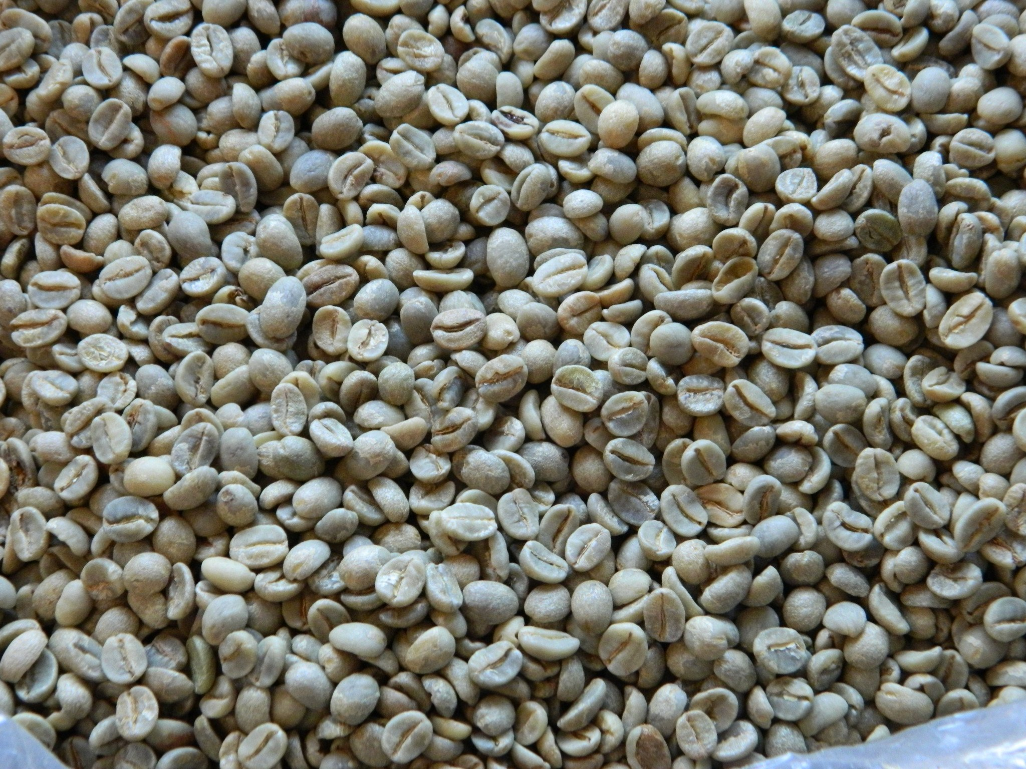Unroasted Green Coffee Beans | 100% Yemeni | 1 kg | by Mocha Coffee Al Yemen