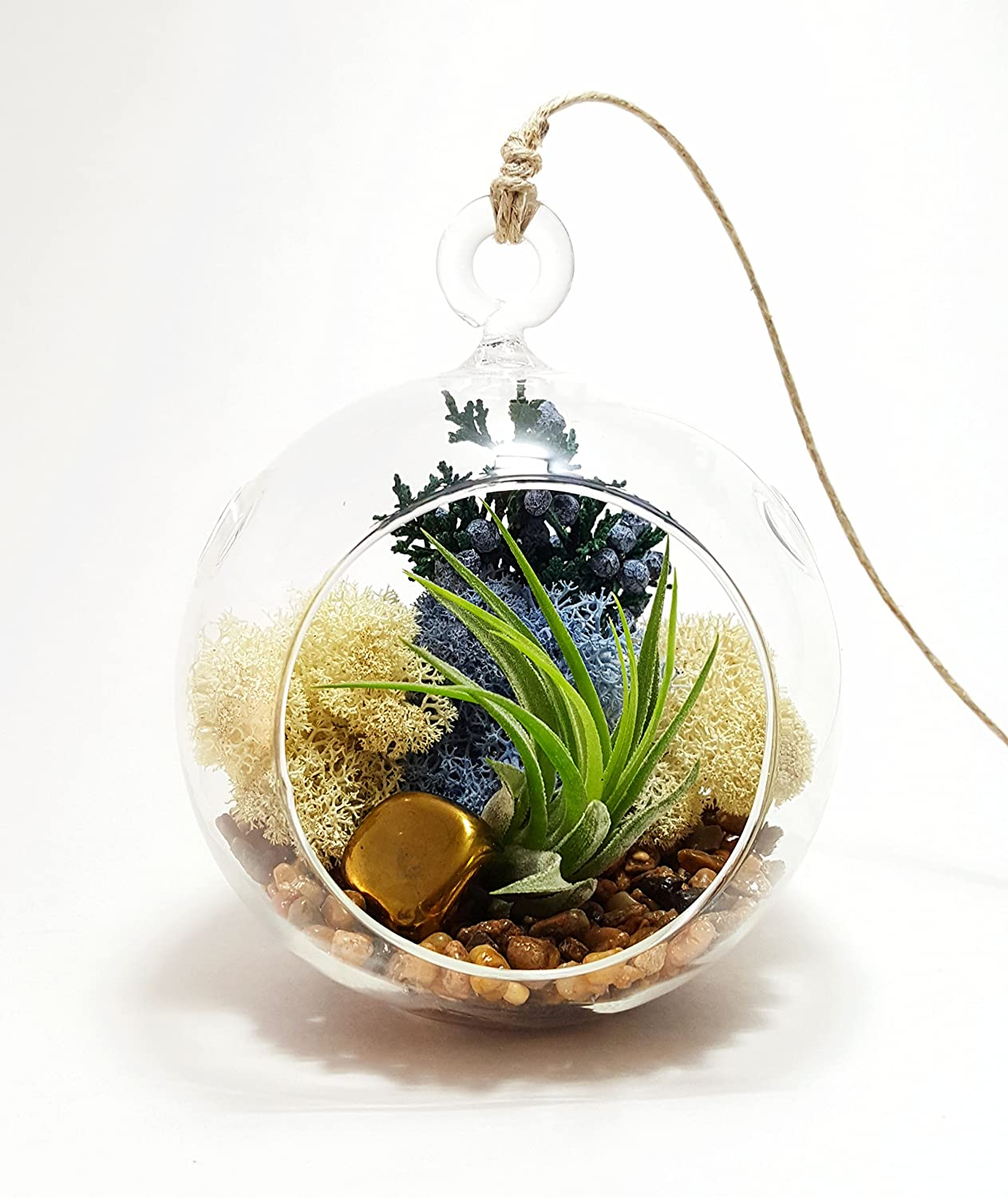 Air Plant Terrarium Amazoncom Bliss Gardens Air Plant Terrarium With 4 Round Glass