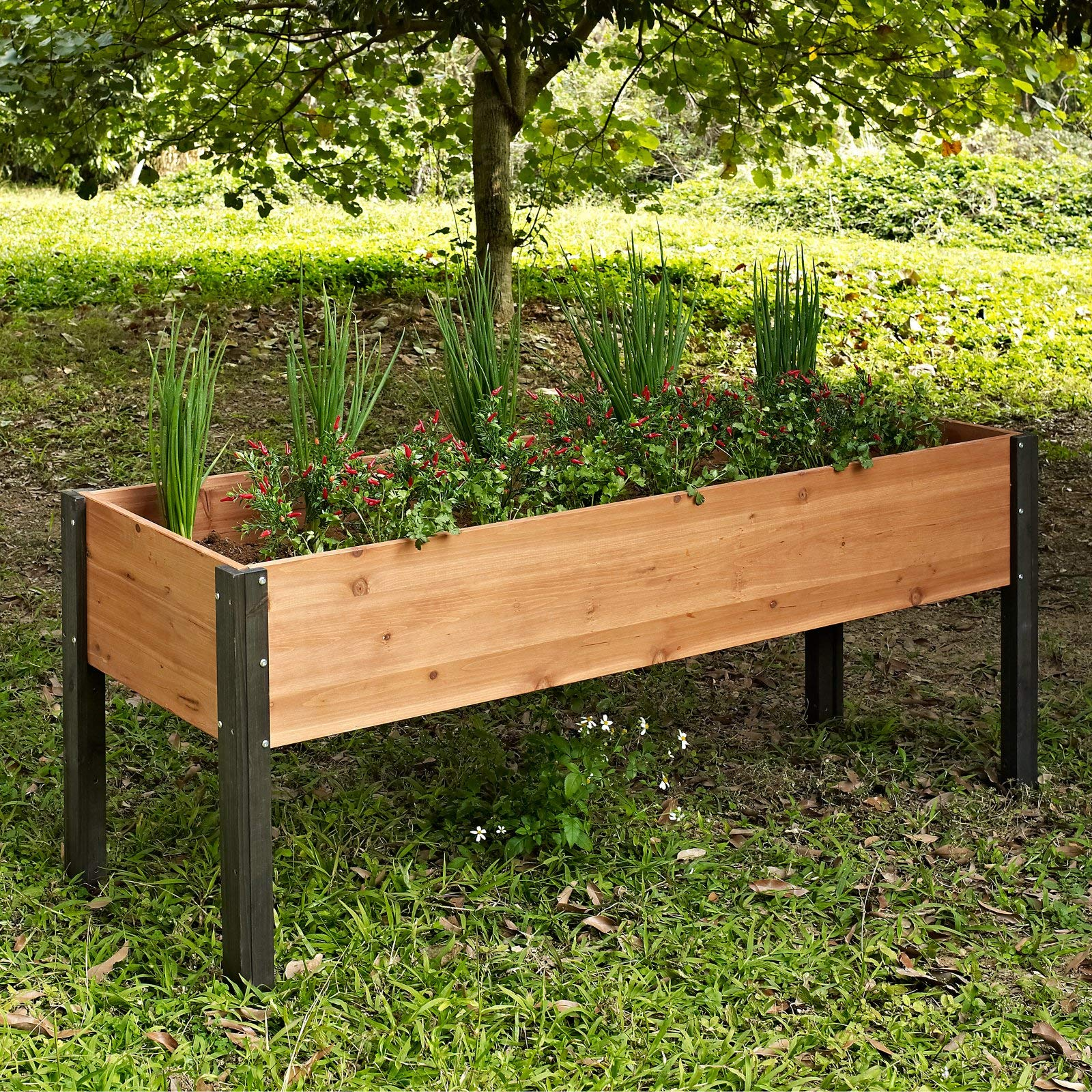 CHEAP Garden Bed Elevated Wood Raised Planter Box