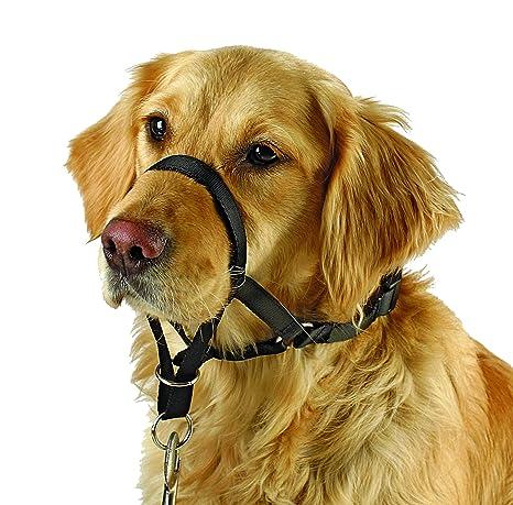 dressage chien 38