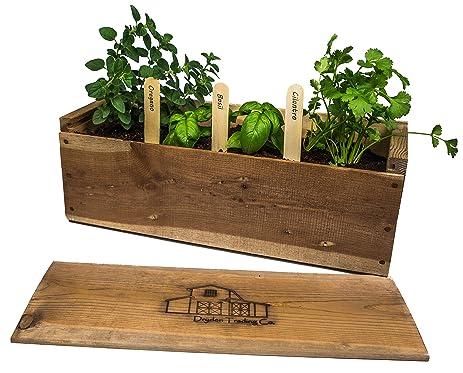 Amazon.com : Indoor Herb Garden Planter Box Kit with Basil ...