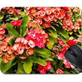 MSD Mousepad Mouse Pads/Mat design 24590112 Christ thorn Euphorbia milii flower close up with green leaves