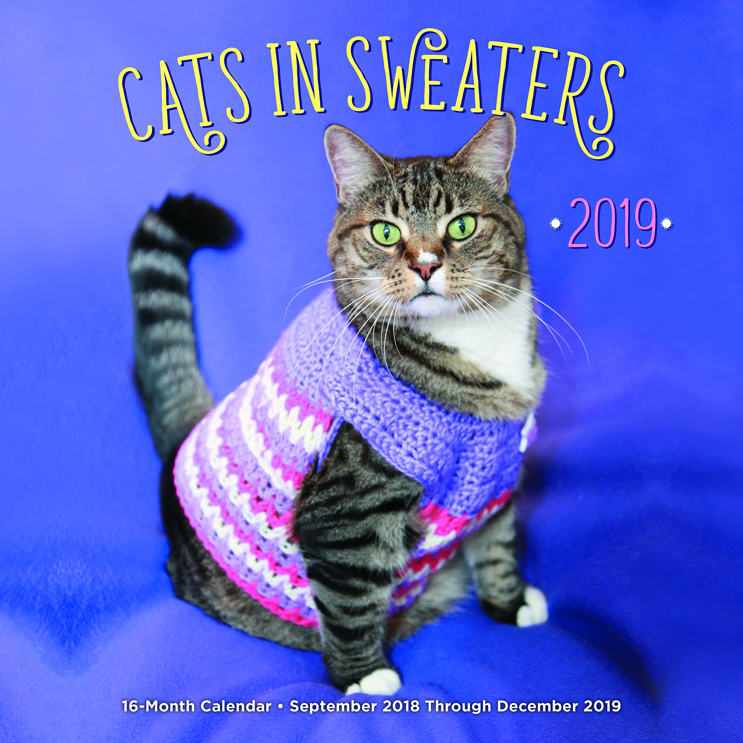Cats In Sweaters 2019: 16-Month Calendar - September 2018 through December  2019: Editors of Rock Point: 9781631064678: Amazon.com: Books