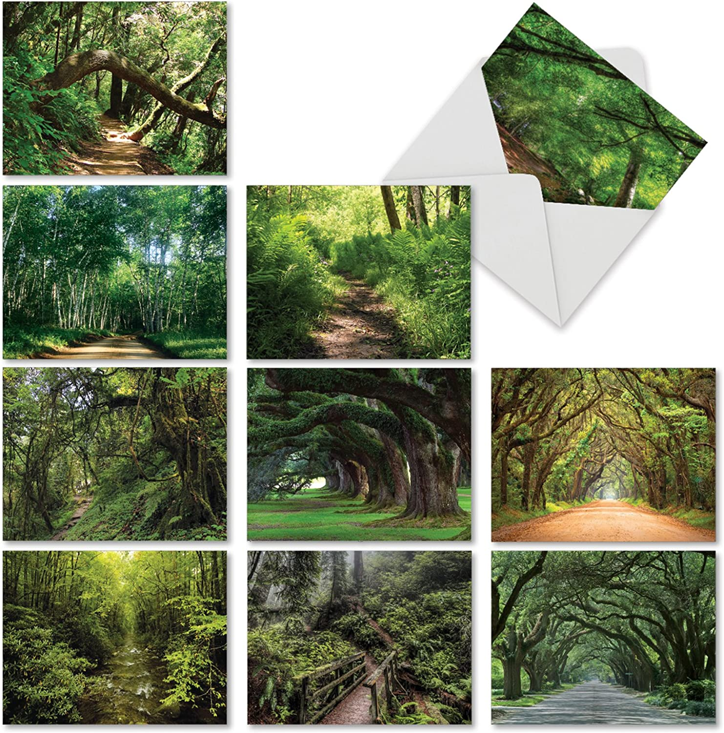 The Best Card Company - 10 Bulk Landscape Note Cards (4 x 5.12 Inch) - Beautiful Forest Paths, Blank Card Assortment - Nature Trails M6467OCB