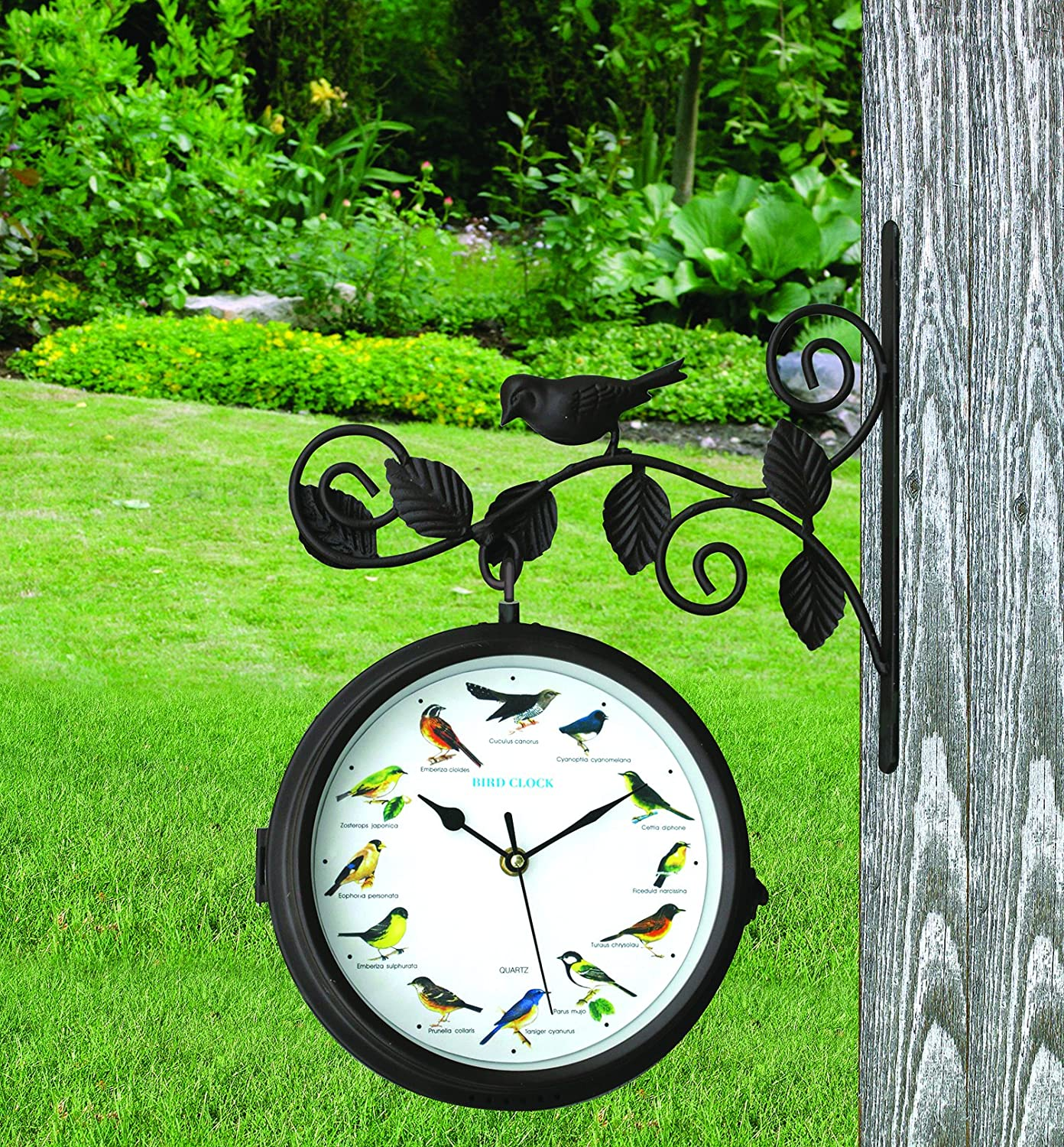 Amazon.com : Dual Sided Outdoor Singing Bird Clock and Thermometer ...