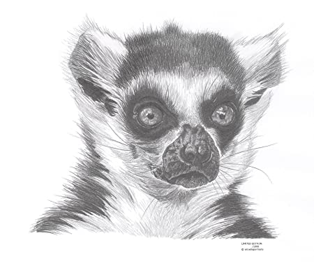 Lemur wildlife limited edition art drawing print signed by uk artist