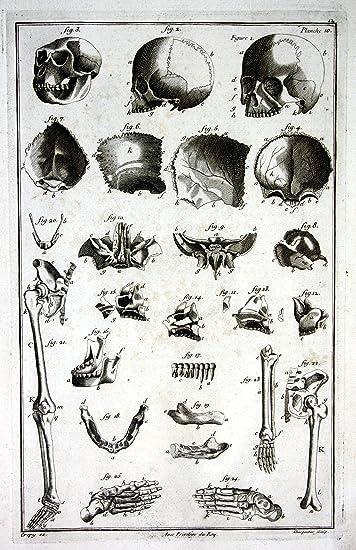 Grafik Skull skulls Schädel Knochen skeleton Skelett Memento Mori ...