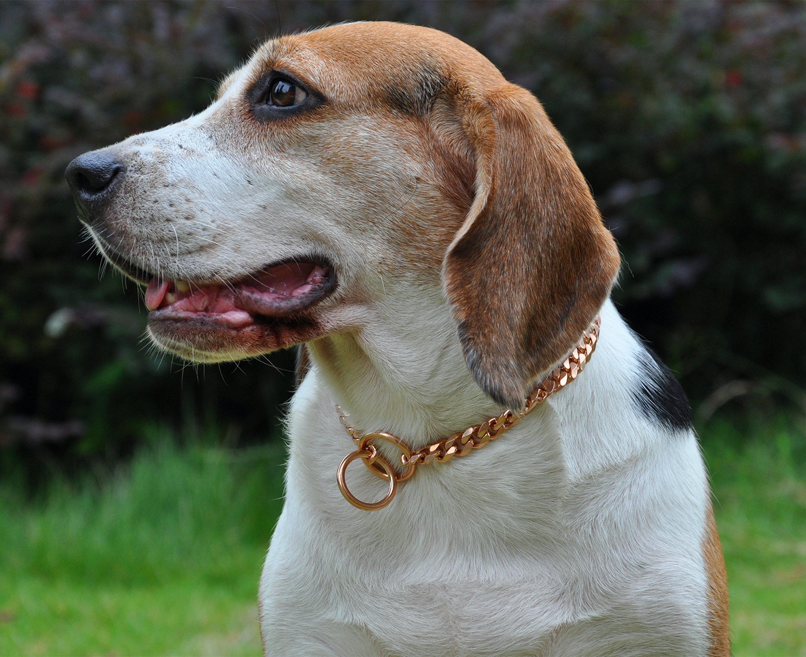 SLZZ Luxury Dog Choke Collar Chain/Slip Martingale P Chain/Heavy Duty Stainless Steel 12mm Curb Chain/Best for Small Medium Large Breeds/Rose Gold,26''