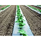 Silver Metallic Plastic Mulch 4 Ft X 600 Ft 1.0 Mil Embossed By Growerssolution