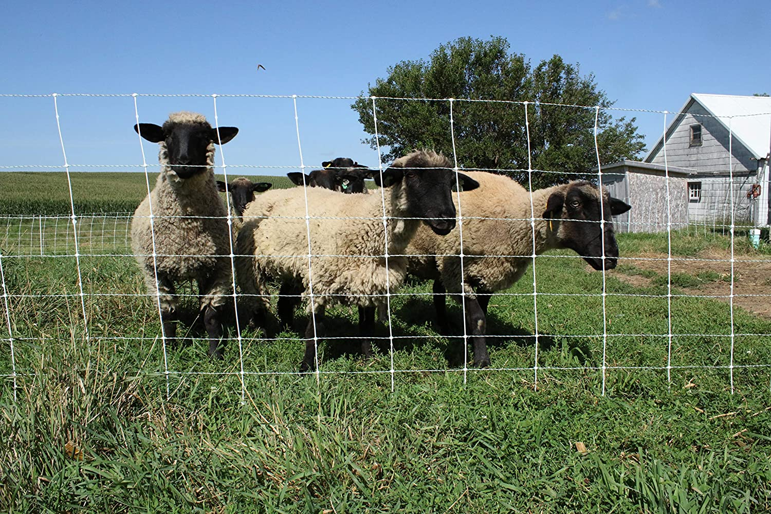 """Orange Sheep and Goat Netting 9//35//8.5 35/""""H x 164/'L Double Spike"""