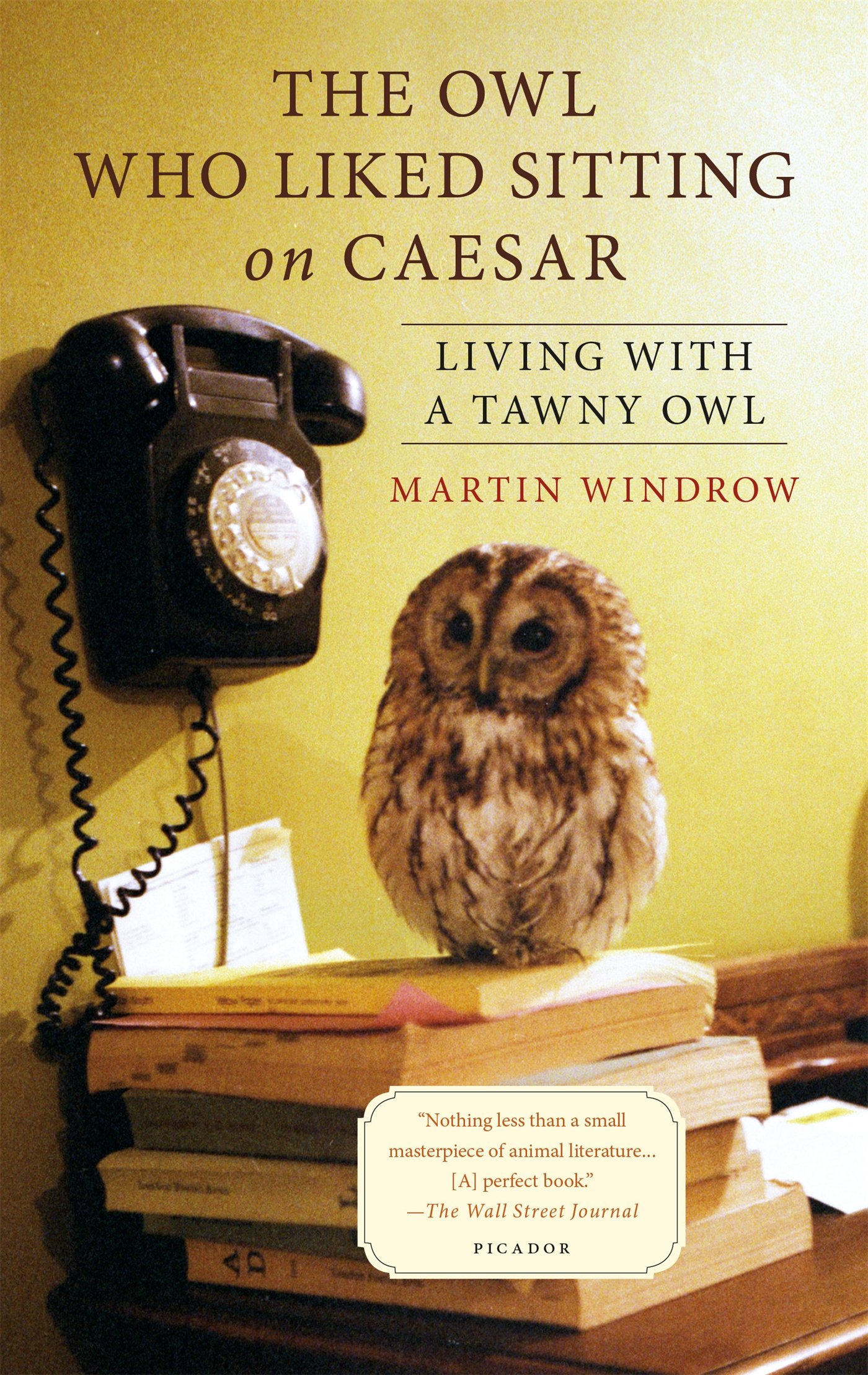 The Owl Who Liked Sitting On Caesar: Living With A Tawny Owl: Martin  Windrow: 9781250069344: Amazon: Books