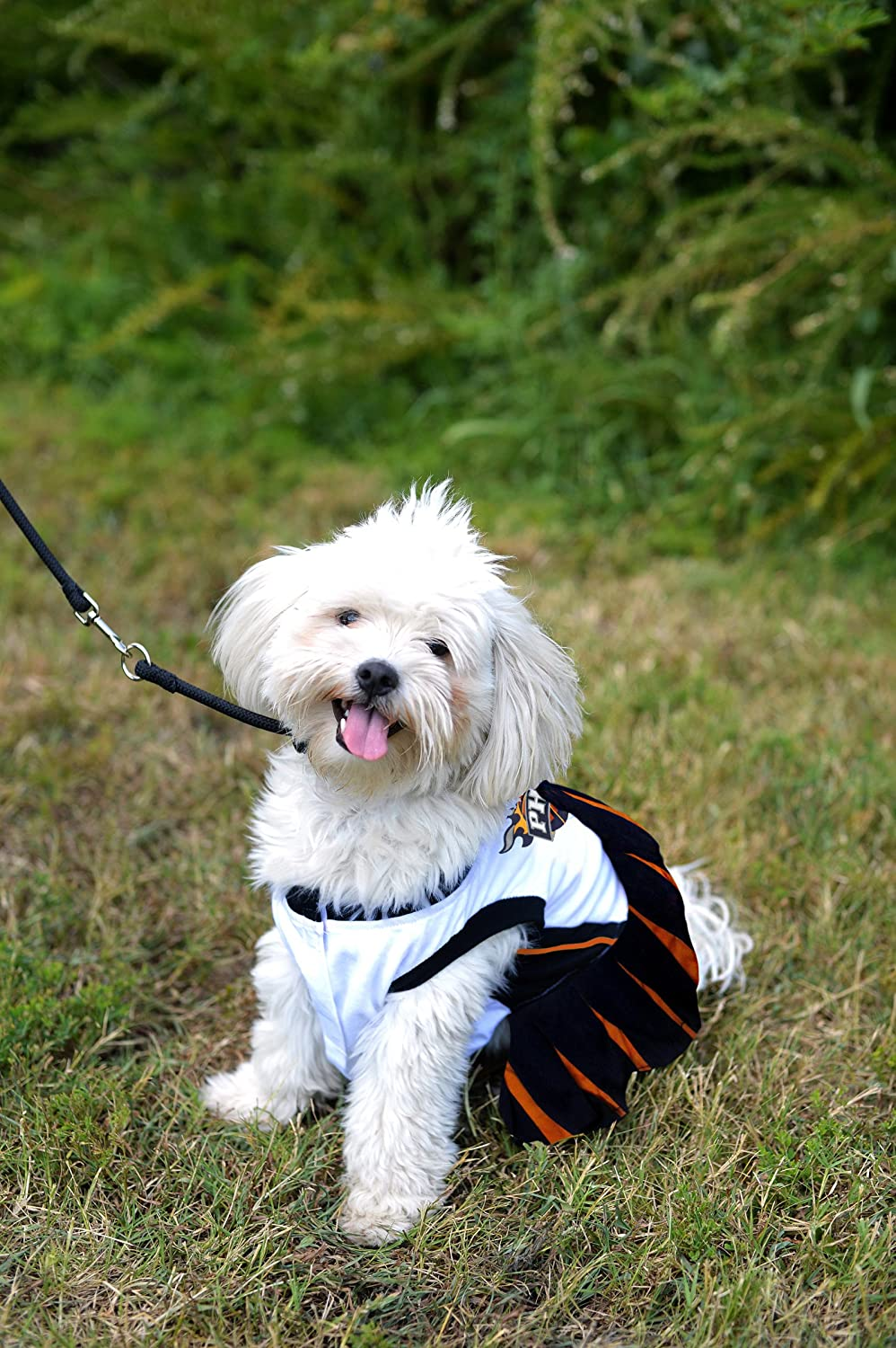Pets First NBA PET Cheerleader Licensed Basketball Cheerleader for Dogs /& Cats Available in 16 Basketball Teams /& 3 Sizes Cute pet Outfit for All Sports Fans.