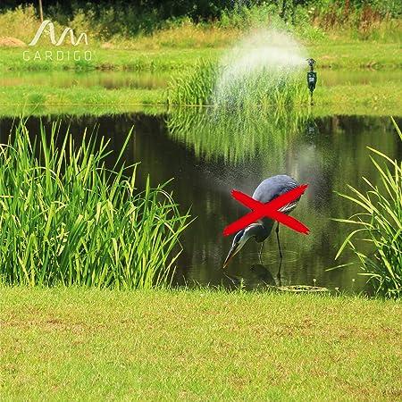 Reiher effektiv vertreiben, um Fische zu schützen