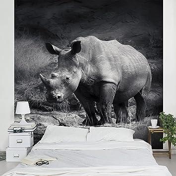 Apalis Vliestapete Lonesome Rhinoceros Fototapete Quadrat | Vlies Tapete  Wandtapete Wandbild Foto 3D Fototapete Für Schlafzimmer