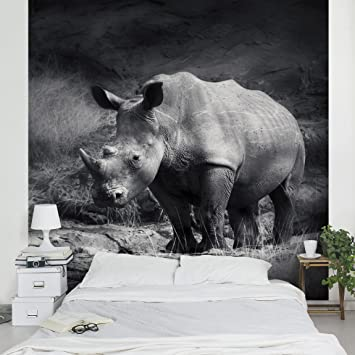 Entzuckend Apalis Vliestapete Lonesome Rhinoceros Fototapete Quadrat | Vlies Tapete  Wandtapete Wandbild Foto 3D Fototapete Für Schlafzimmer