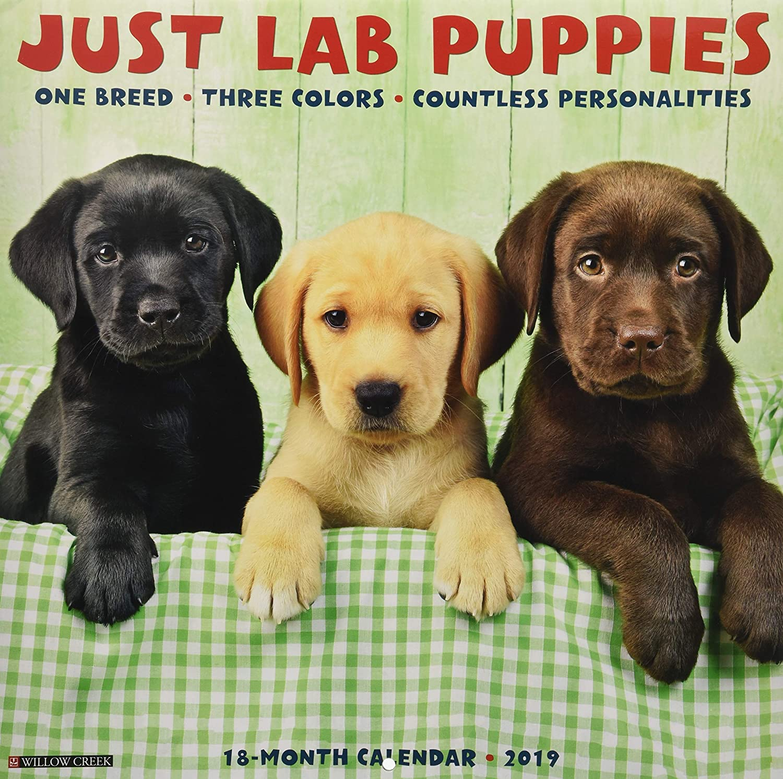Amazoncom Just Lab Puppies 2019 Wall Calendar Dog Breed Calendar
