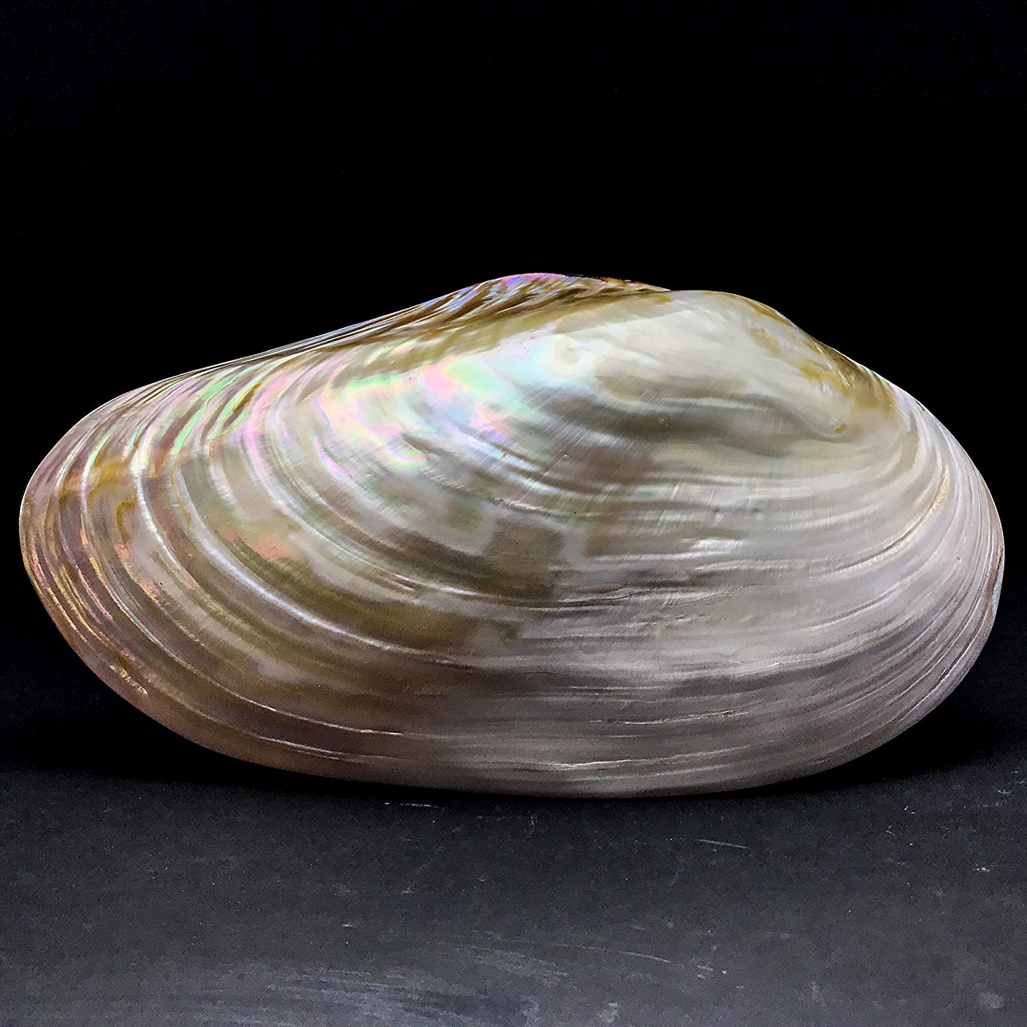 Astro Gallery of Gems Mother of Pearl Clam Shell