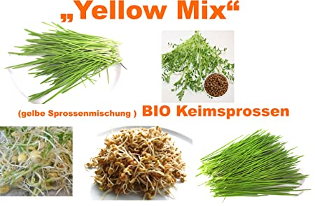 500 g bio Semillas germinadas mezcla - Yellow Mix de semillas Semillas 5 x 100 g Semillas para la germinación Cultivo de cebada, kicher guisantes, ...