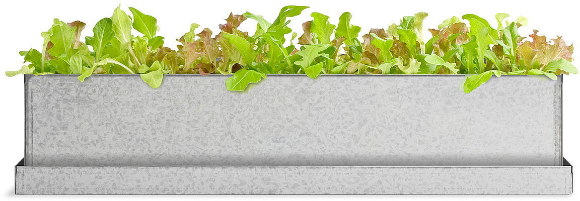 Gourmet Lettuce Windowsill Growbox | grow your own lettuce | UncommonGoods