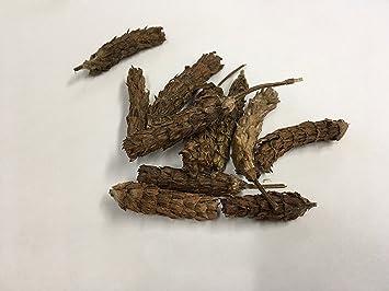 Amazon com : Wild Spica Prunellae | Wild Prunella vulgaris L