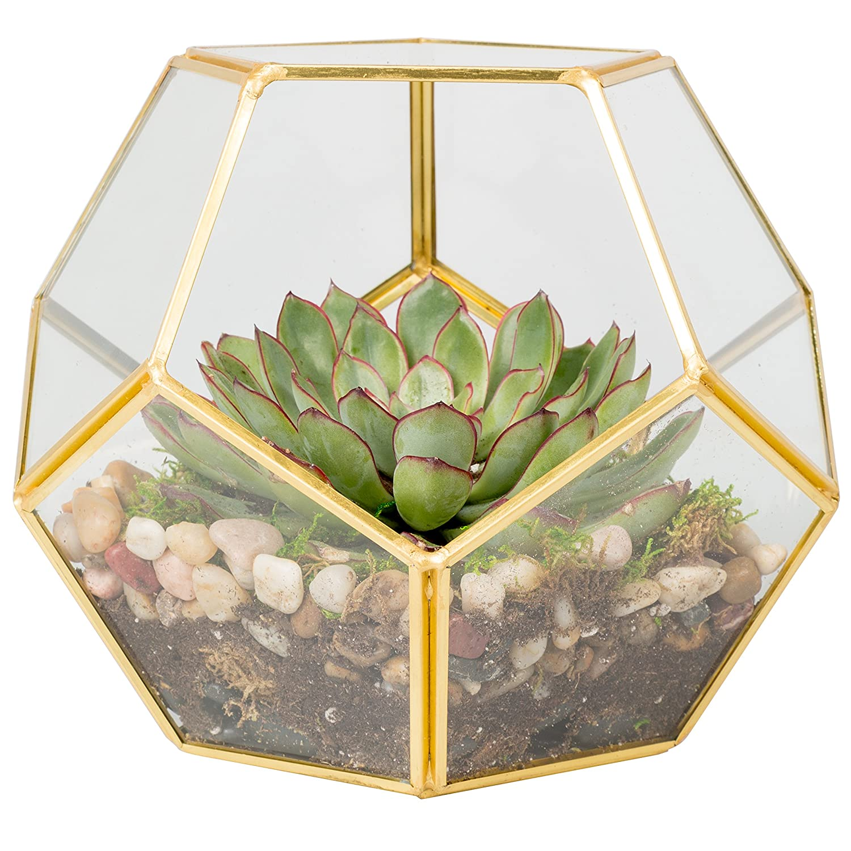 Amazon Com Deco Glass Terrarium Succulent Air Plant Sphere