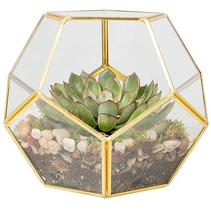 Deco Glass Terrarium, Succulent & Air Plant (Sphere)