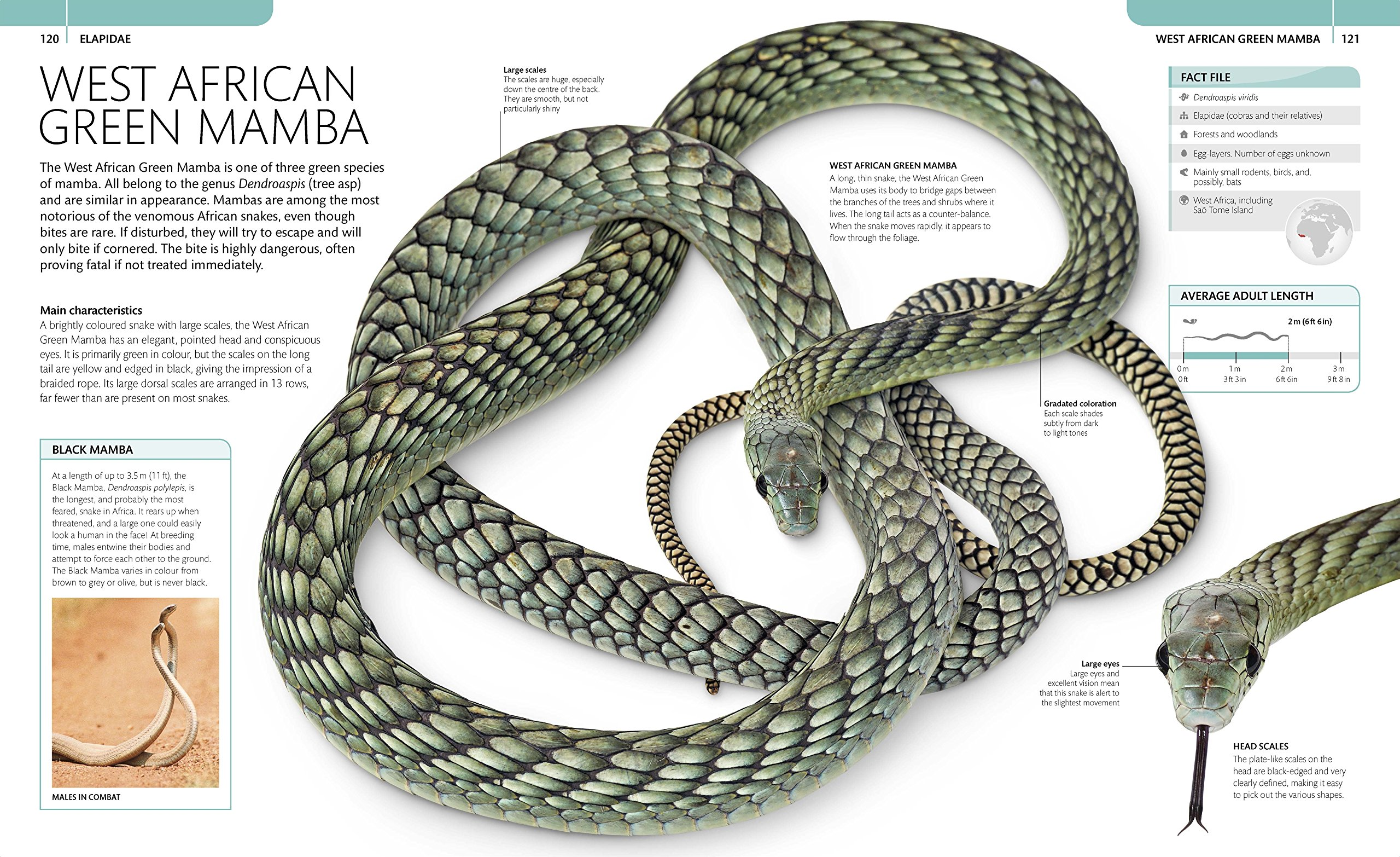 Snake The Essential Visual Guide Chris Mattison Skeleton Diagram Find Incredible 9780241226247 Books