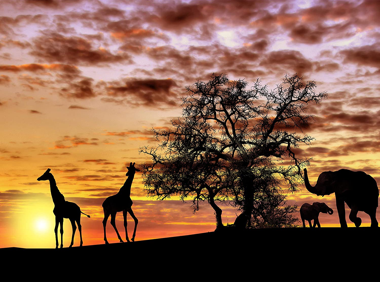Motivtapeten Vlies-Tapeten Fototapete Afrika landschaft Fototapeten Wandbild