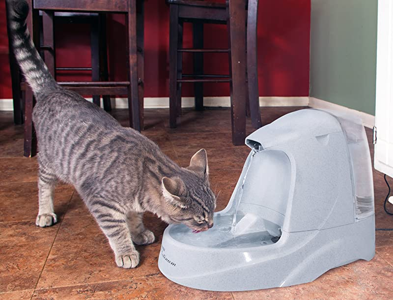 Let Your Cat Live Fresh 5 Best Cat Water Fountains Available In The
