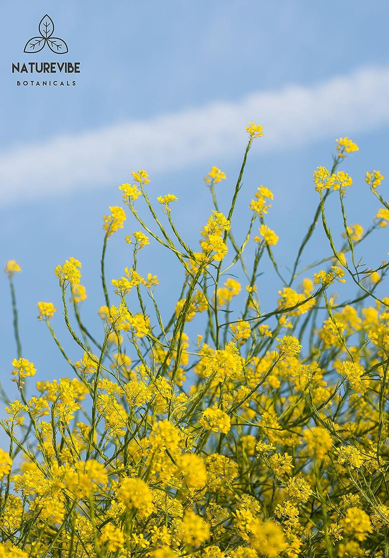 Amazon.com : Organic Black Mustard Seed (1lb) by Naturevibe ...