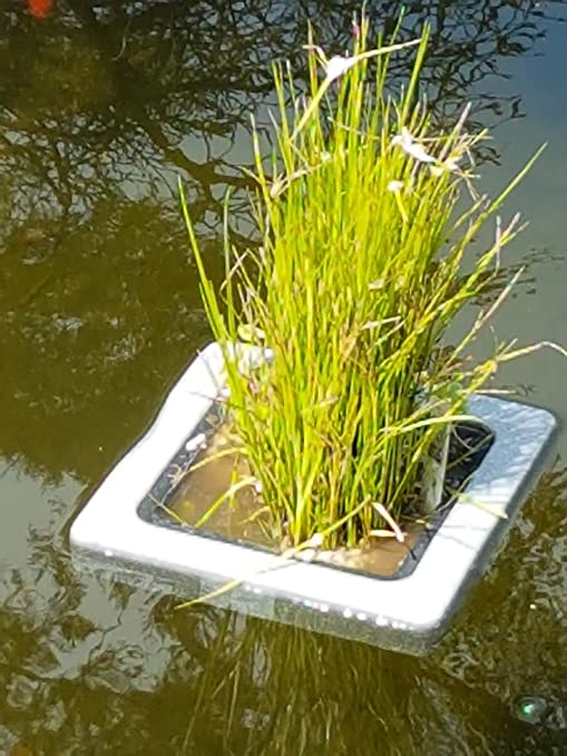 Amazon.com : Square Floating Plastic Koi Pond Plant Basket 7 Inch, Floats  Naturally In Ponds : Garden U0026 Outdoor