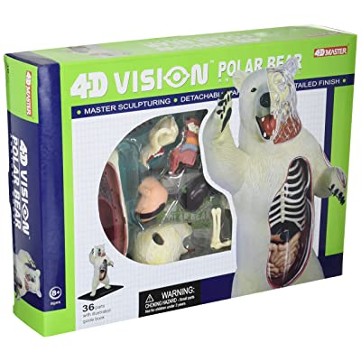 4D Master 4D Vision Polar Bear Anatomy Model Science Kit, One Color, 26097: Toys & Games