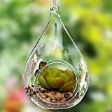 Decorative Teardrop Design Clear Glass Globe / Hanging Artificial Succulent Plant Terrarium Vase