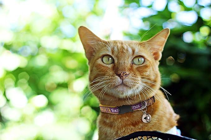 MINNESOTA VIKINGS CAT COLLAR. - Strong   Adjustable FOOTBALL Cat Collars  with Metal Jingle Bell   Pet Supplies 33b46ac4f
