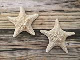 White Small Caribbean Starfish Wall Hangings, 2